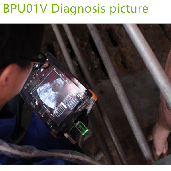 Brand New Palm Veterinary Ultrasound Machines,Portable ultrasound scanner,ultrasound scanner,ultrasound machines price for vet ,vet medical equipment supplies